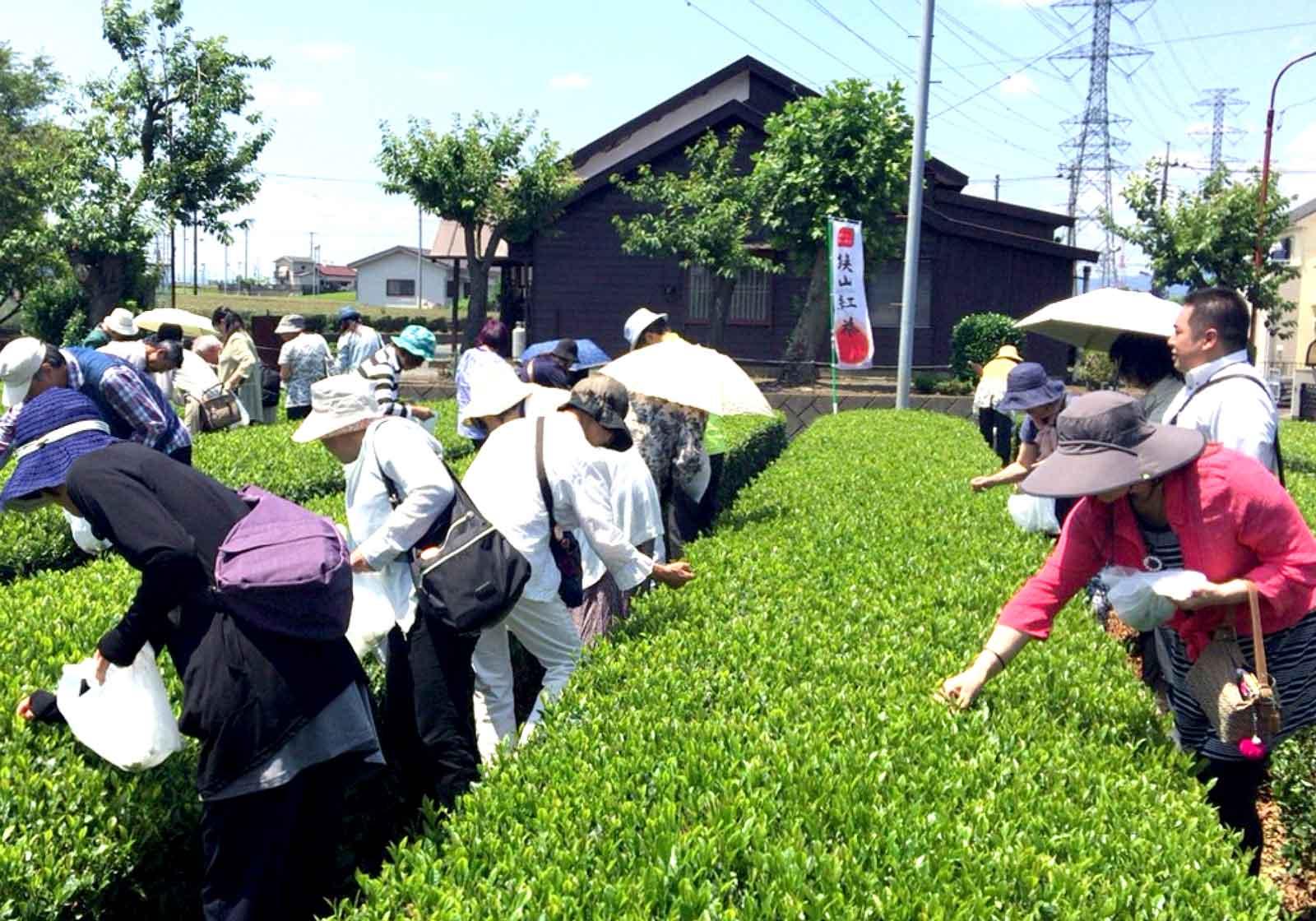 栽培から販売まで、<br>一貫した茶づくりがおもしろい
